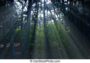ray of light in the trees