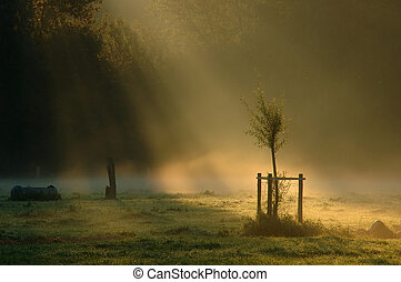 ray of light - on a little tree