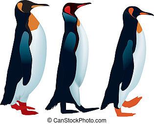 rayado, pingüinos, tres, arriba, caminata