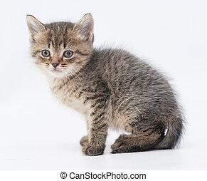 rayado, velloso, gatito, se sienta, con, un, triste, mirada