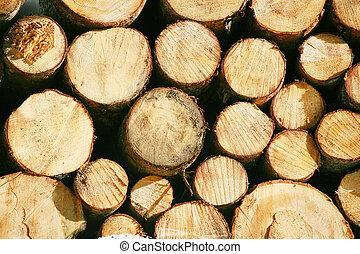 rayo, cortocircuito, caballón, madera, madera