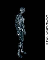 rayon x, body., xray, humain, mâle