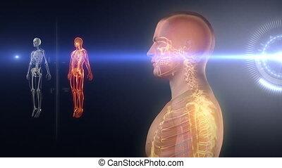 rayon x, corps, monde médical, humain, balayage
