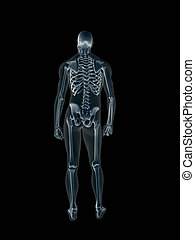 rayon x, mâle, xray, humain, body.