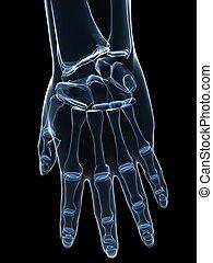 rayon x, main