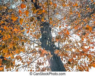 foto de Coloré, soleil, arbres, automne, au-dessous, flamme.