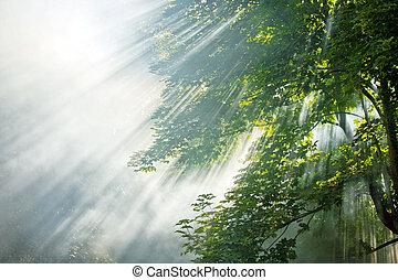 rayons, forêt, lumière soleil