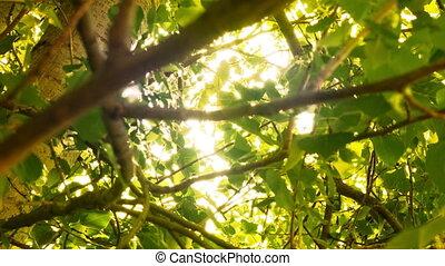 rayons légers, arbre, par, atteindre