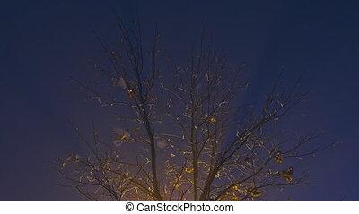 rayons légers, brouillard, nuit, forêt