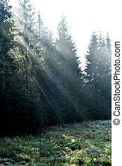 rayons, lumière soleil, matin, sombre, forêt, profond