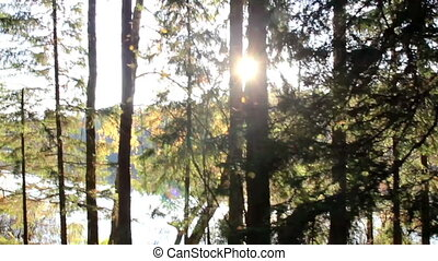 rayons, obtenir, soleil, intérieur, arbres, forêt, despite, grand