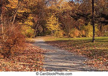 rayons, soleil, feuilles, automnal, arbres, automne, park.