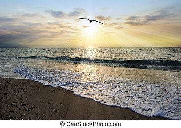 rayons soleil, silhouette, oiseau