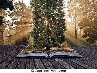 rayos de sol, otoño, o, bosque de otoño, inspirador, venida,...