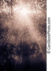 rayos sol, por, verano, ramas, en el parque, en, sepia