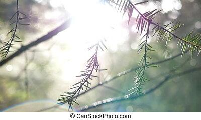 rays, лес, солнечный лучик, филиал
