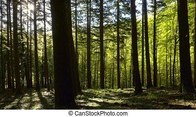 rays, панорама, лес, весна, солнце