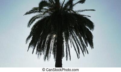 rays, солнце, грузия, tree., пальма, через