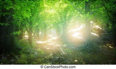 rays, туманный, весна, лес, солнце, утро