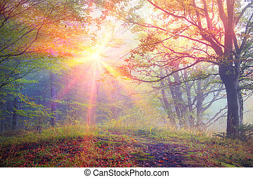 Alpine autumn, scenic sunrise in the beautiful Carpathian forest after rain shining colors and the freshness and coolness of the morning - will clear the new day and good weather after the storm