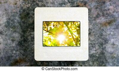 Rays of light shine through the tree on slide film