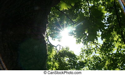 Rays of light shine through the tree