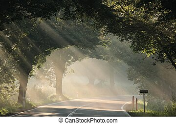 road on a foggy morning