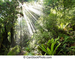 Rays of sunlight beam trough dense tropical jungle - Sun...