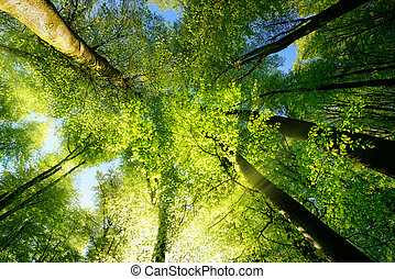 Rays of sunlight beautifully illuminating treetops