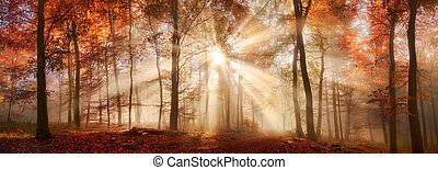 Rays of sunlight in a misty autumn forest