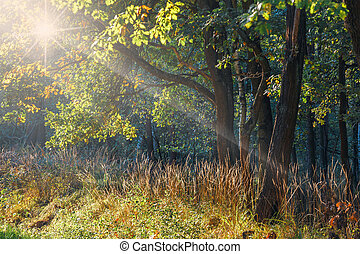 rays of sunlight in the green forest