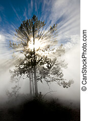 Rays of Sunlight in Yellowstone National Park