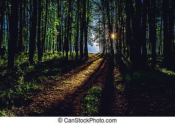 Rays of sunlight on footpath