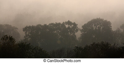 Rays of sunlight penetrate morning fog in the forest.