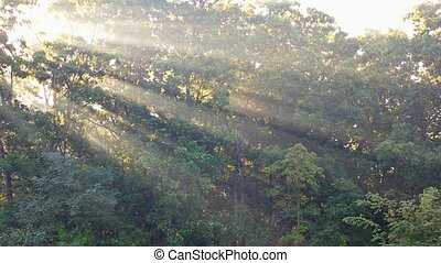 Rays of sunlight shine through the trees on a foggy morning...