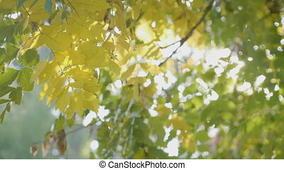 Rays of sunlight shining over a tree branch with yellow...