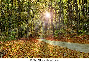 rays of sunlight through the forest
