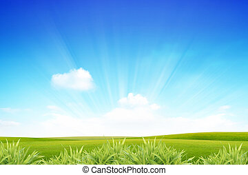 rays of sunshine - rays of the sun on the green lawn