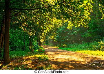 rays of the morning sun illuminate the park