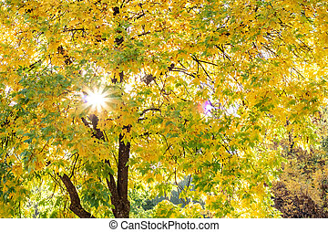 Rays of the sun among the yellow autumn leaves