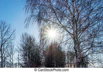 Rays of the sun fall on the branches of tree