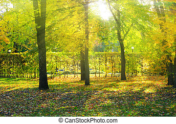 rays of the sun make their way through trees in the autumn park