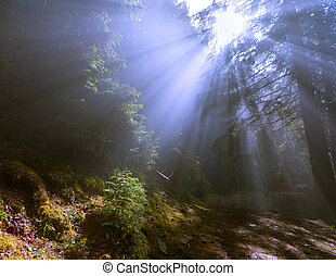 rays of the sun through the fog in the woods