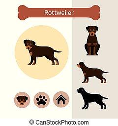 razza, rottweiler, infographic, cane