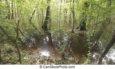 Reach Vegetation of Swamp - Reach vegetation of swamp....