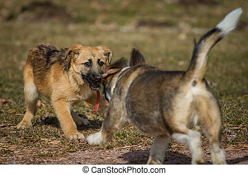 Reaction - Two dogs wild game on a dog park, which is a a...