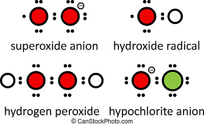 Reactive oxygen species (ROS): superoxide anion, hydroxide...