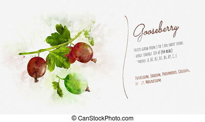 Ready animation about the benefits of Gooseberry - Animation...