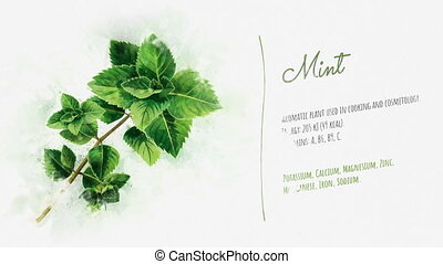 Ready animation about the benefits of Mint - Animation of...