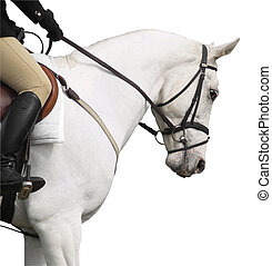 Ready for the Ring - A head shot of a white horse warming up...